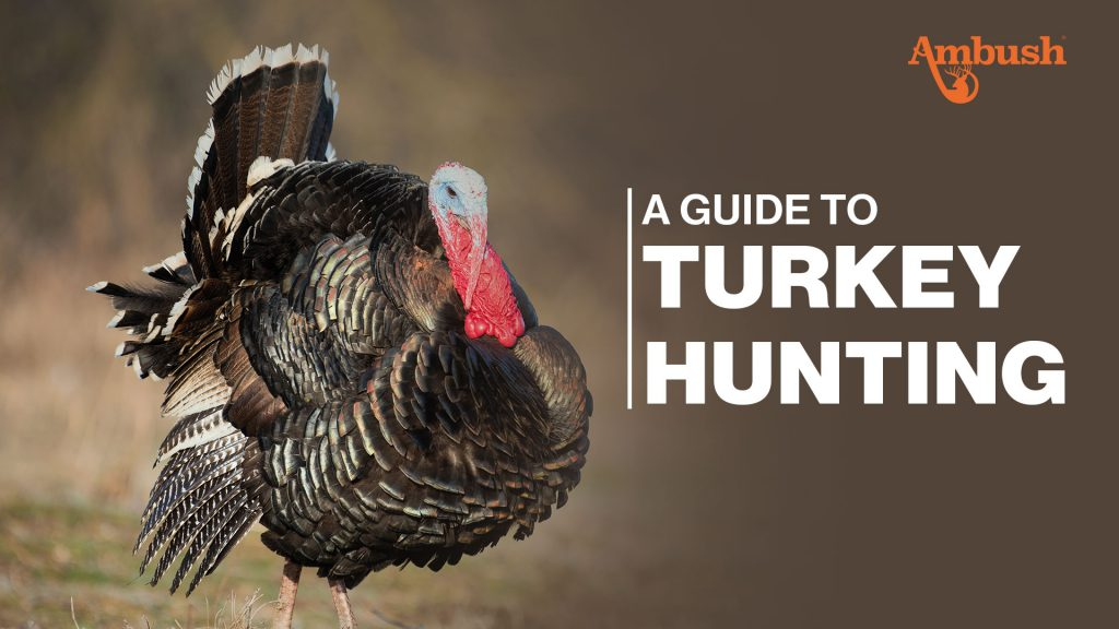 Guide to Turkey Hunting
